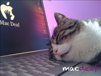 Cat loves apple